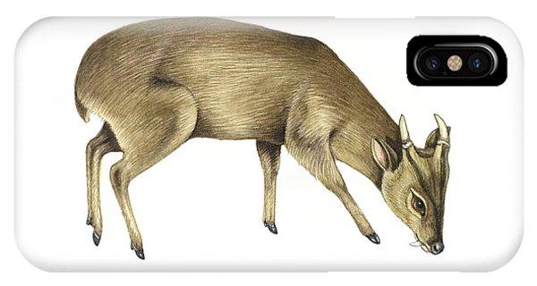 Common Muntjac Deer, Artwork Phone Case by Lizzie Harper