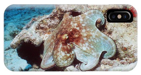 Common Octopus Phone Case by Georgette Douwma