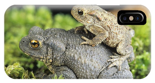 Common Toads Mating Phone Case by David Aubrey