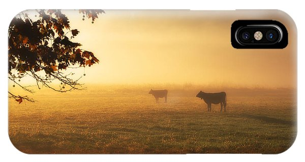 Cows In A Foggy Field IPhone Case