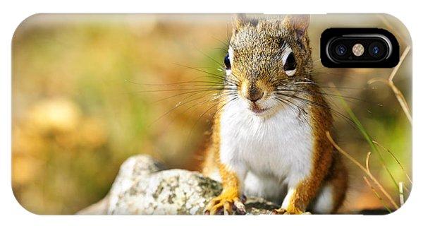 Cute Red Squirrel Closeup IPhone Case