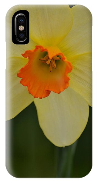Daffodilicious IPhone Case