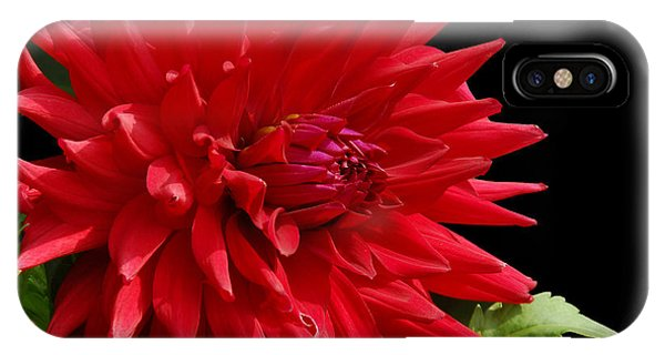 Decked Out Dahlia IPhone Case