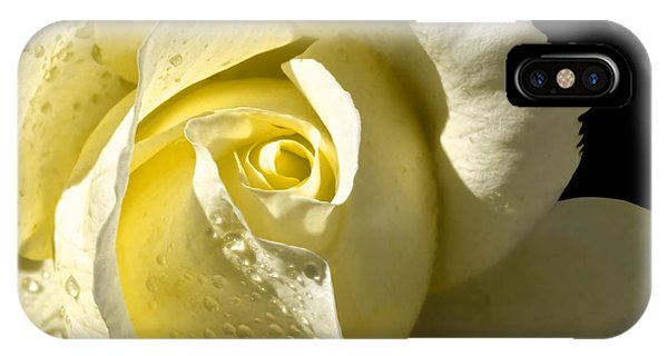 Delightful Yellow Rose With Dew IPhone Case