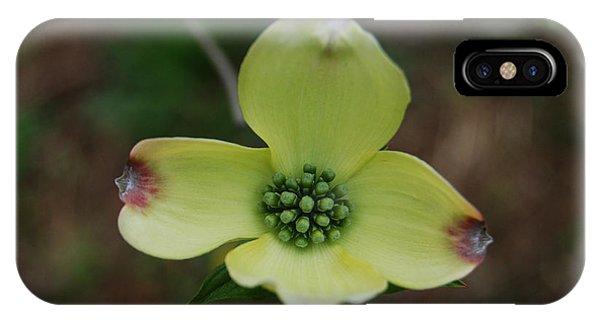 Dogwood Flower IPhone Case