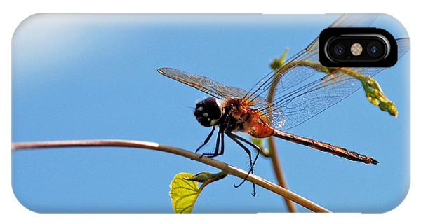 Dragonfly On A Vine IPhone Case