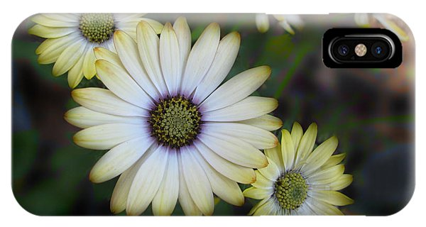 Dream Daisy IPhone Case