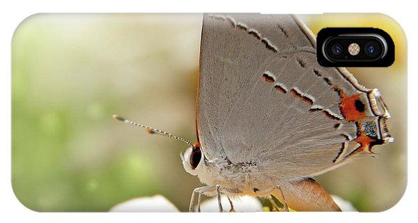 Dreamy Hairstreak Butterfly IPhone Case