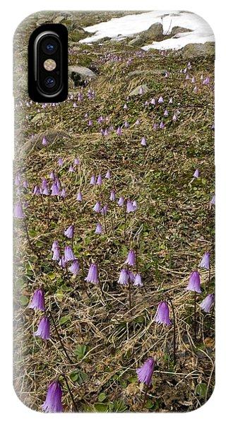 Dwarf Snowbell (soldanella Pusilla) Phone Case by Bob Gibbons