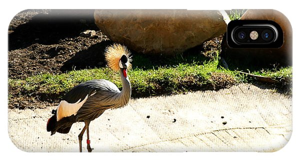 East African Crowned Crane IPhone Case