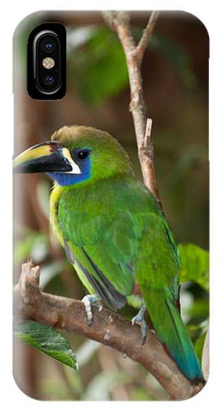 Emerald Toucanet At La Paz Waterfall Gardens IPhone Case