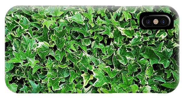 English Ivy (hedera Helix 'kolibri') Phone Case by Archie Young