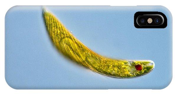 Euglena Protozoan, Light Micrograph Phone Case by Gerd Guenther
