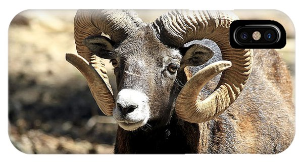 European Big Horn - Mouflon Ram IPhone Case