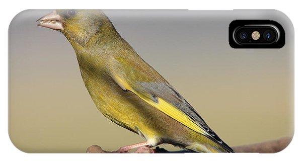 European Greenfinch IPhone Case