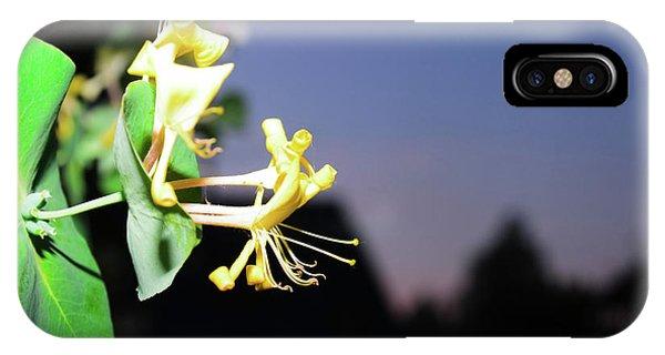 Evening Sonata. Perfoliata IPhone Case
