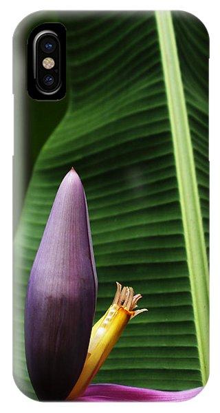 Exploring Light In Nature IPhone Case