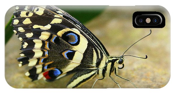 Eye To Eye With A Butterfly IPhone Case