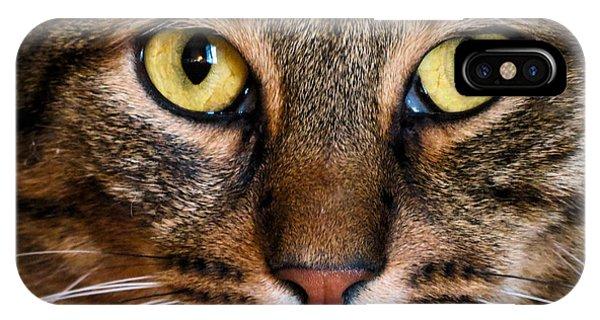 Face Framed Feline IPhone Case