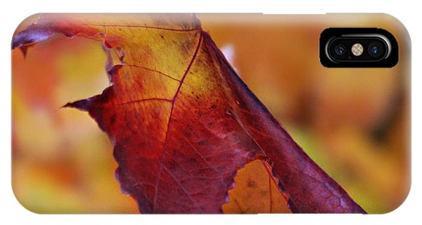 Fall Leaf IPhone Case