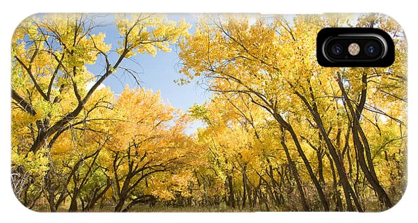Fall Leaves In New Mexico IPhone Case