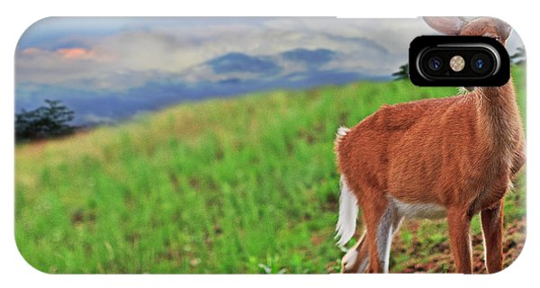 White Tailed Deer iPhone Case - Fawn by Everet Regal