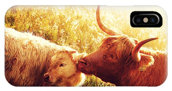 Fenella With Her Daughter. Highland Cows. Scotland IPhone Case