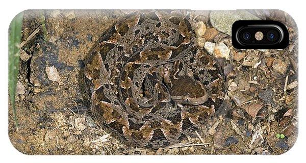 Fer-de-lance Snake Phone Case by Bob Gibbons