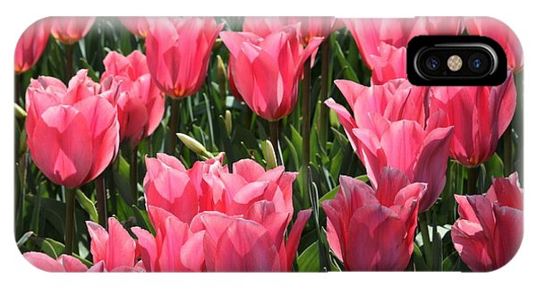 Field Of Pink Tulips IPhone Case