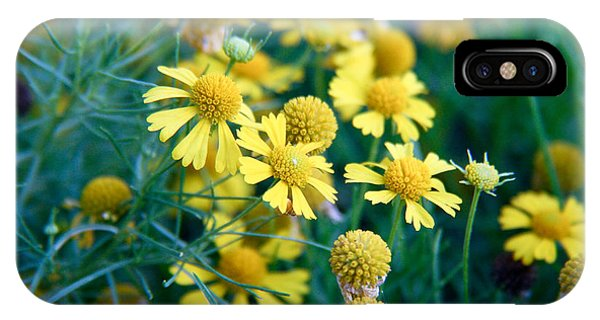Field Of  Yellow Daisies  IPhone Case