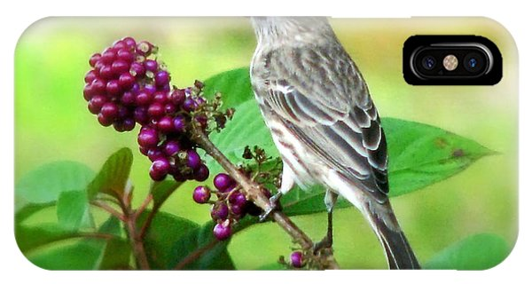Finch Eating Beautyberry IPhone Case
