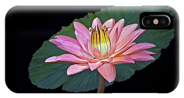 Lillie iPhone Case - Floating Water Lily by Susan Candelario