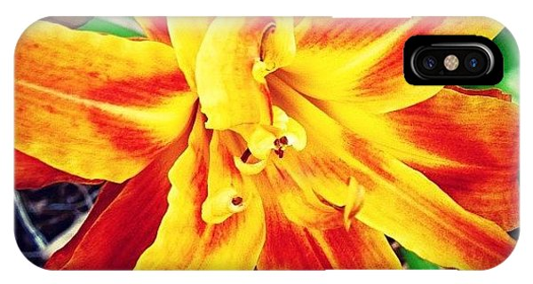 Bright iPhone Case - Flower by Katie Williams