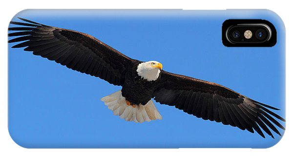Flying Bald Eagle IPhone Case