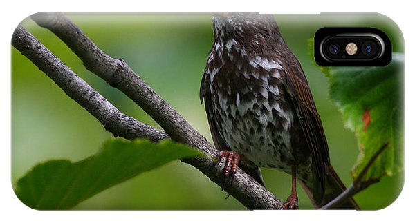 Fox Sparrow IPhone Case