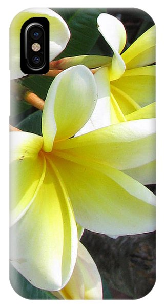 Frangipani Up Close IPhone Case