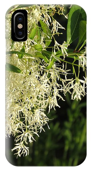 Fringe Tree IPhone Case