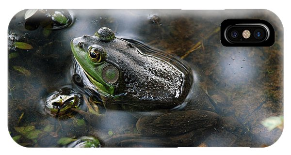 Frog In The Millpond IPhone Case