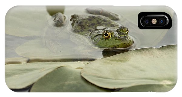 Frog On Lily Pads  IPhone Case