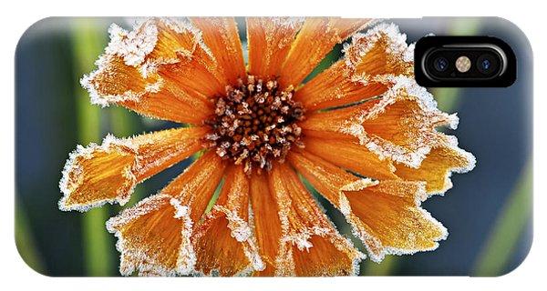 Fall Flowers iPhone Case - Frosty Flower by Elena Elisseeva