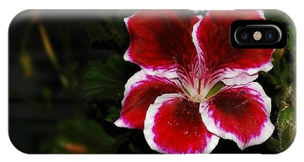 Geranium  IPhone Case