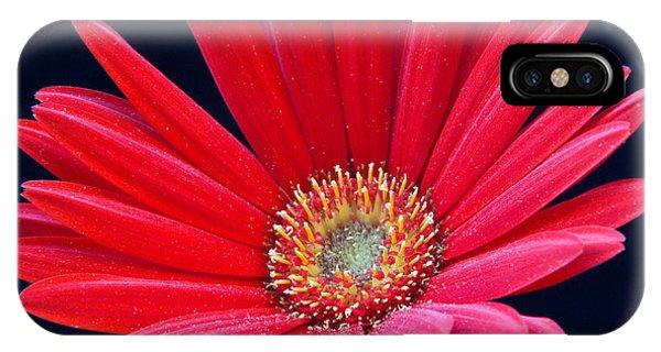 Crossville iPhone X Case - Gerbera Daisy 1 by Douglas Barnett