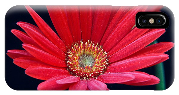 Crossville iPhone X Case - Gerbera Daisy 2 by Douglas Barnett