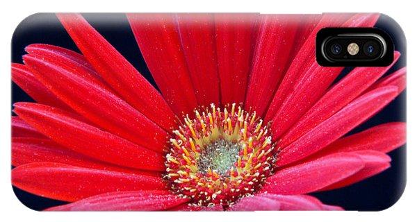 Crossville iPhone X Case - Gerbera Daisy 6 by Douglas Barnett