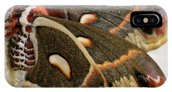 Giant Silkworm Moth 063 IPhone Case