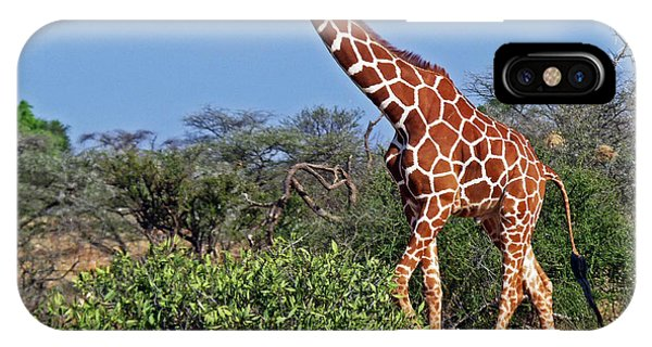 Giraffe Against Blue Sky IPhone Case