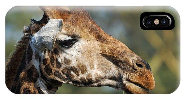 Giraffe Phone Case by Alan Clifford