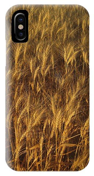 Golden Beauty IPhone Case