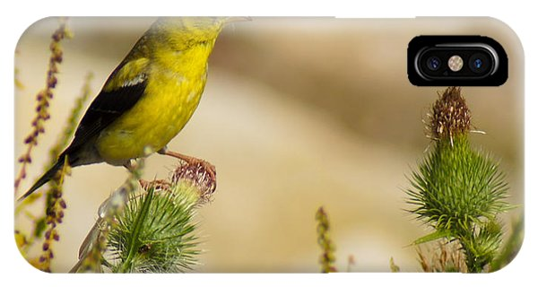 Goldfinch On Lookout IPhone Case