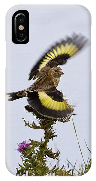 Goldfinch On Thistle IPhone Case